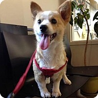 Adopt A Pet :: May - Hamilton, ON