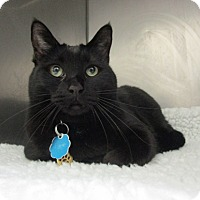 Adopt A Pet :: Marbie - Laguna Woods, CA