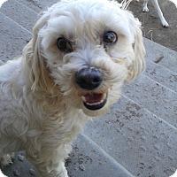 Adopt A Pet :: Buddy - Northumberland, ON