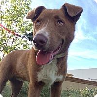 Adopt A Pet :: Clay - Mission Viejo, CA