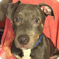 Adopt A Pet :: Denver - Cincinnati, OH