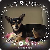 Adopt A Pet :: Jentri - Snyder, TX