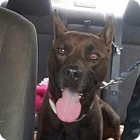 Adopt A Pet :: Taz - Greenville, NC