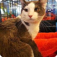 Adopt A Pet :: Grayson - Smyrna, GA
