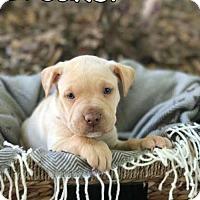 Adopt A Pet :: Breaker - Mobile, AL