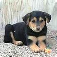 Adopt A Pet :: Kitty's Kilo - Las Vegas, NV