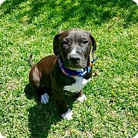 Adopt A Pet :: Dylan - Newport Beach, CA