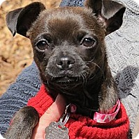 Adopt A Pet :: Mandy - Chimayo, NM