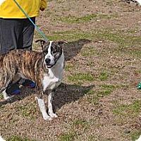 Adopt A Pet :: Lady - Conyers, GA