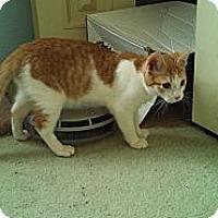 Adopt A Pet :: Patrick - small dynamo - Scottsdale, AZ
