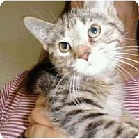 Adopt A Pet :: Nani - Proctor, MN