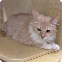 Adopt A Pet :: Allie  (Fleece) - Monroe, GA