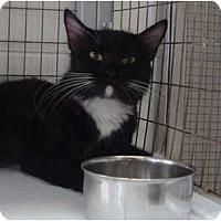 Adopt A Pet :: Demi - Winter Haven, FL