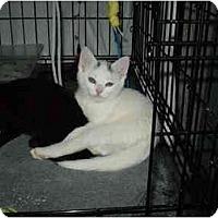 Adopt A Pet :: Ivory - Boston, MA