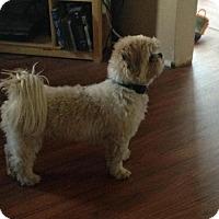 Adopt A Pet :: Benji - Saskatoon, SK
