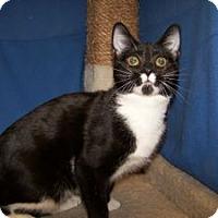 Adopt A Pet :: K-Ts5-Talulah - Colorado Springs, CO