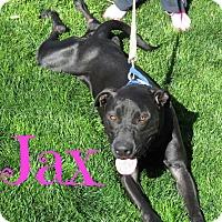 Adopt A Pet :: Jax - Scottsdale, AZ