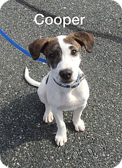 Hound (Unknown Type) Mix Puppy for adoption in oxford, New Jersey - Cooper