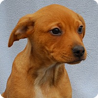 Adopt A Pet :: Mohican - East Sparta, OH