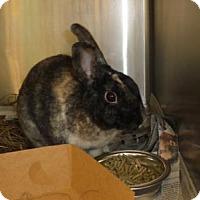 Adopt A Pet :: MUFFIN - West Palm Beach, FL
