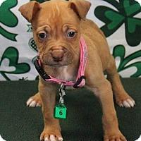 Adopt A Pet :: BONNIE - Gustine, CA