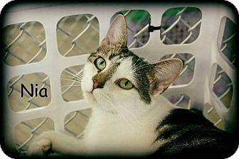 Domestic Shorthair Cat for adoption in Waverly, New York - Nia