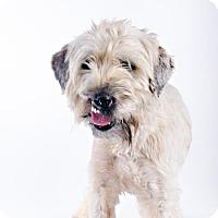 Adopt A Pet :: Joaquin - St. Louis Park, MN