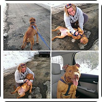 American Pit Bull Terrier Mix Dog for adoption in bridgeport, Connecticut - Smiley