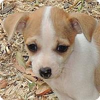 Adopt A Pet :: Lily - La Habra Heights, CA