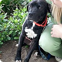 Adopt A Pet :: Bradley - Mission Viejo, CA