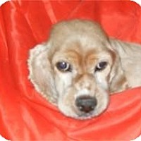Adopt A Pet :: Gloria - Antioch, IL