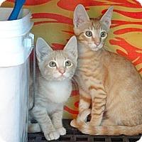 Adopt A Pet :: Bernie - Escondido, CA
