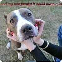 Adopt A Pet :: Meeka - Orlando, FL