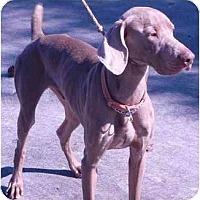 Adopt A Pet :: Jack *Pending Adoption* - Eustis, FL
