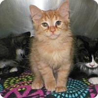 Adopt A Pet :: Cider - Dover, OH