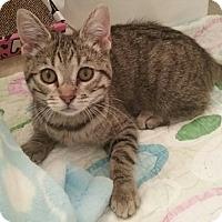 Adopt A Pet :: Mandi - North Highlands, CA