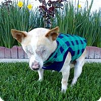 Adopt A Pet :: Lucas - Irvine, CA