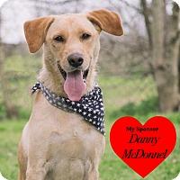 Adopt A Pet :: Mister Rufus - San Leon, TX