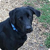 Adopt A Pet :: Ruger - Folsom, LA