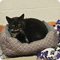 Adopt A Pet :: BIG MIKE - Olathe, KS