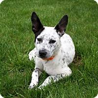Adopt A Pet :: PUPPY SANSA - richmond, VA