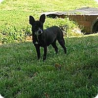 Adopt A Pet :: Abby - Albemarle, NC