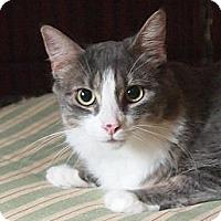 Adopt A Pet :: Toni - Ocean City, NJ