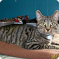 Adopt A Pet :: Lilian - Dover, OH