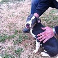 Adopt A Pet :: Lucy - Blanchard, OK