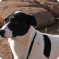 Adopt A Pet :: Zorro - Roosevelt, UT