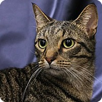 Adopt A Pet :: Lulu - Alexandria, VA