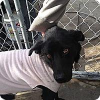 Adopt A Pet :: Minnie - Seattle, WA