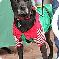 Adopt A Pet :: Ava - Alpharetta, GA