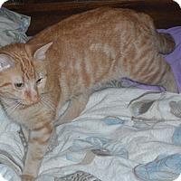 Adopt A Pet :: Junior - Pensacola, FL